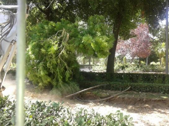 Parque Alameda - Miguel Quesada Cabrera